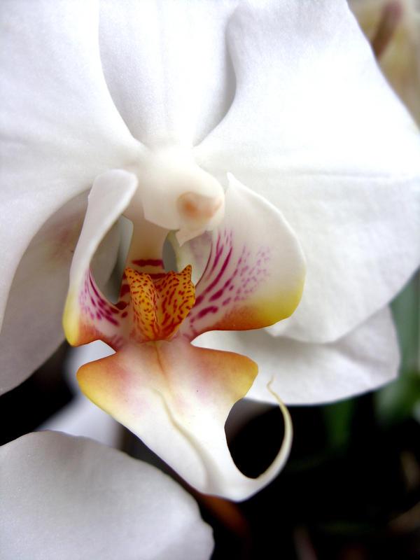Lilies In Their Sensitivities. by auberjeanne