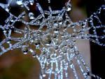 Spider Diamonds I