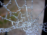 Spider Diamonds III