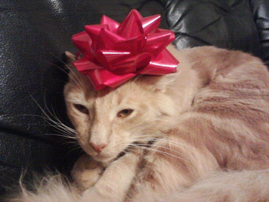 Christmas Kitten by KonekoKaburagi