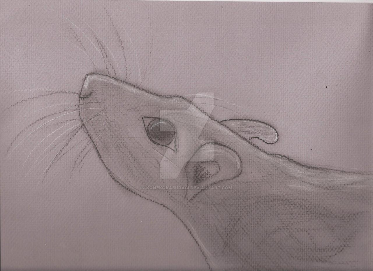 Pet Rat Charcoal by KonekoKaburagi