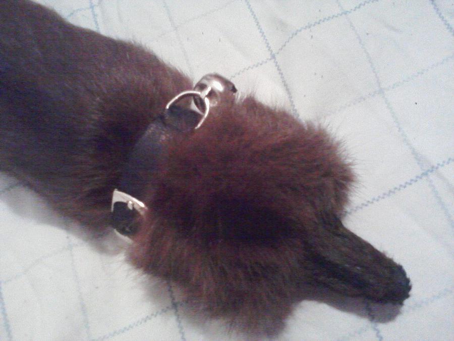 Bell Collar finished by KonekoKaburagi