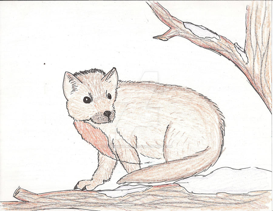 Pine Marten Doodle by KonekoKaburagi
