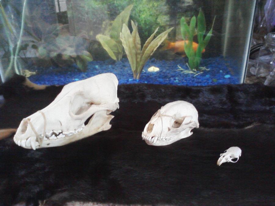 Skulls by KonekoKaburagi
