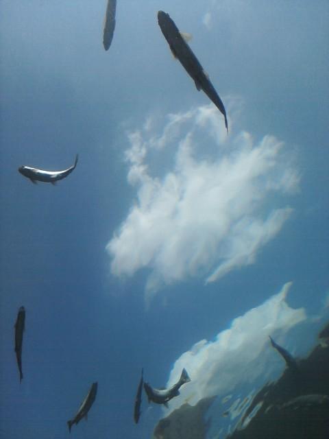 Flying Fishies!! by KonekoKaburagi