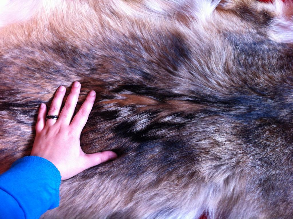 Coyote's back by KonekoKaburagi