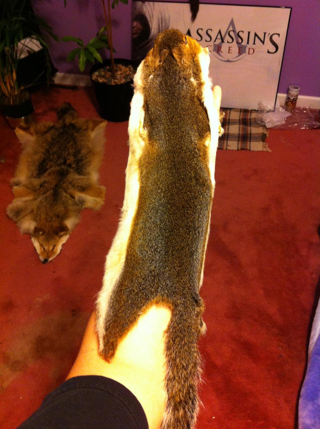 Gray Squirrel Tanning project by KonekoKaburagi