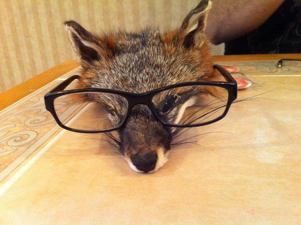 Shinobu the gray fox by KonekoKaburagi