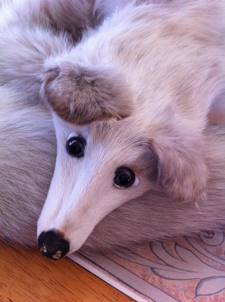 Vintage fox stole by KonekoKaburagi