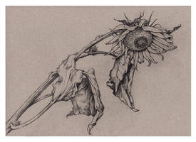 Death of a Sunflower by JohnPatience