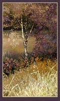 Riverside Birch  by JohnPatience