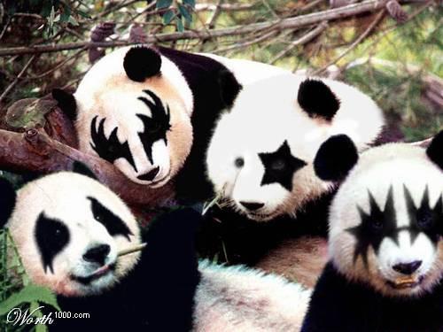 The Pandas got to my Makeup