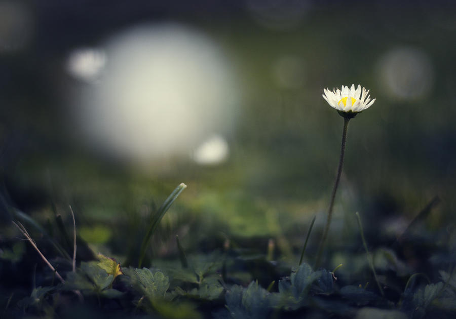 Flower Power | Night Bloomer | 13.7