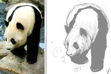 Panda by Zell-K