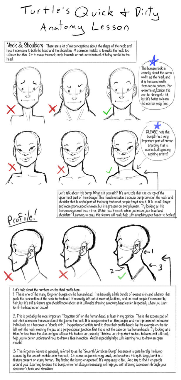 Q+D Anatomy Lessons- Neck and Shoulders by Turtle-Arts