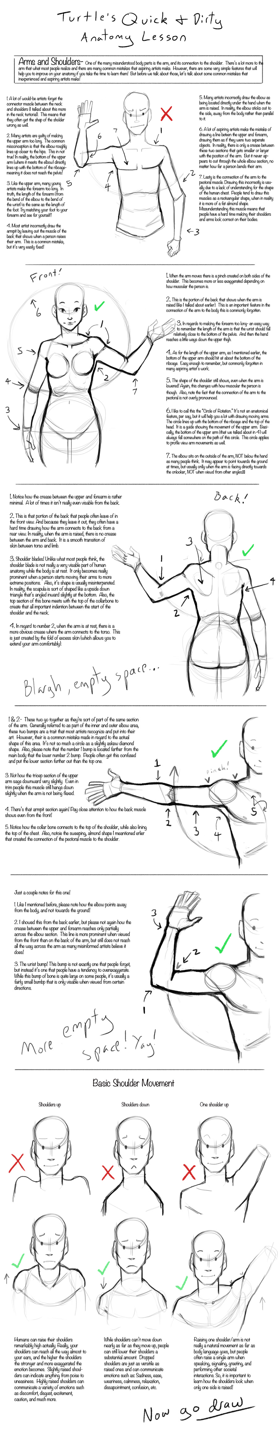 Q+D Anatomy Lessons- Arms and Shoulders by Turtle-Arts