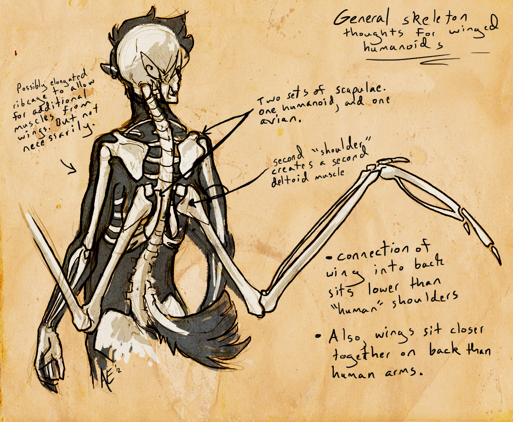 Humanoid Wing Anatomy Whatnot by Turtle-Arts