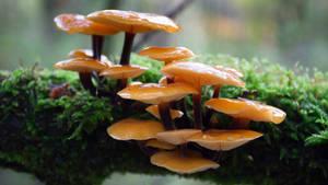 Yet More Mushrooms
