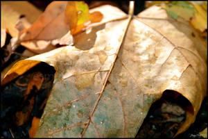 Dappled Leaf by Esmerelde