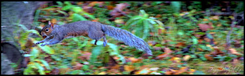 Leaping Squirrel by Esmerelde