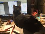 Leo likes to watch me draw