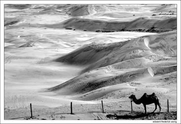 Camel, Flag in Background
