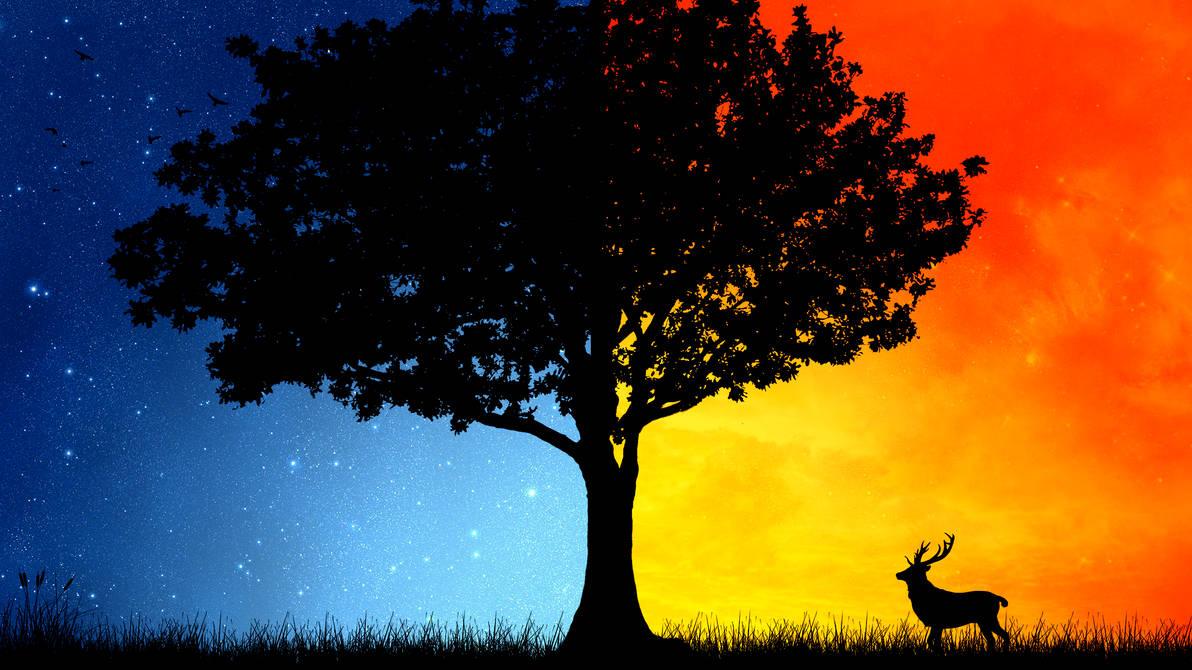 Day Night Tree