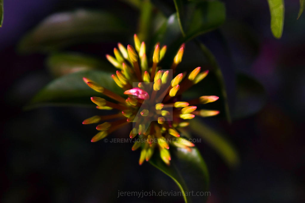 Prelude to Bloom by jeremyjosh