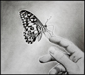 Butterfly by 07Frank