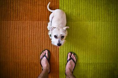 ...Dog... by kmetos