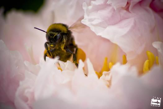 portrait of bees