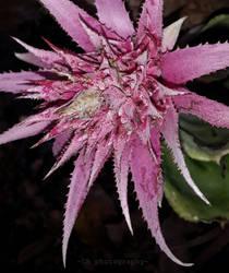 pink flower1 by CasandraBphotography