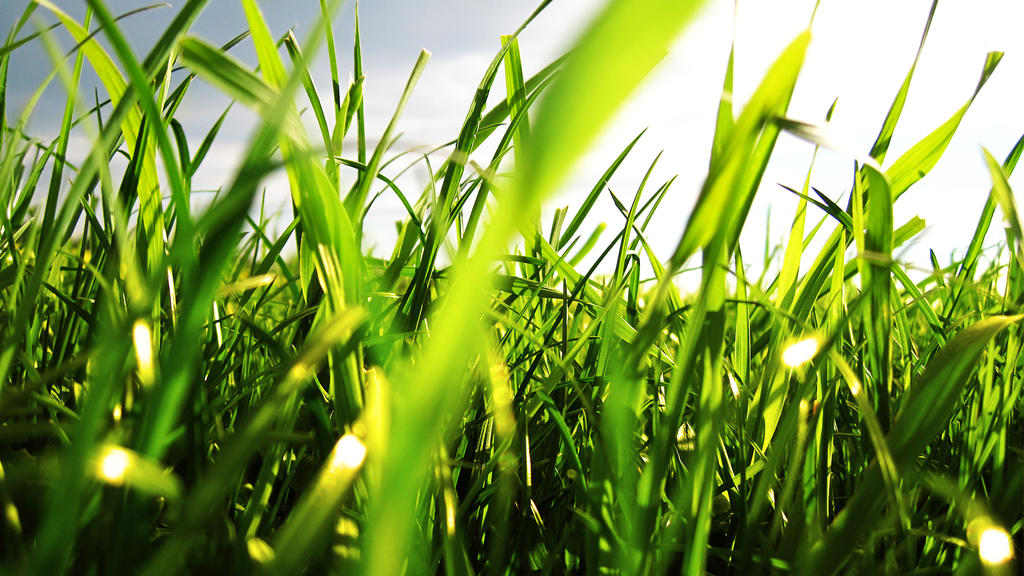 grass by GodlikeMcx