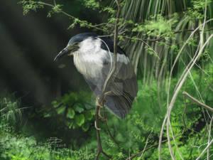 Watcher in the Reeds