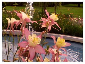Flowers and Fountain by Cerise-Angel