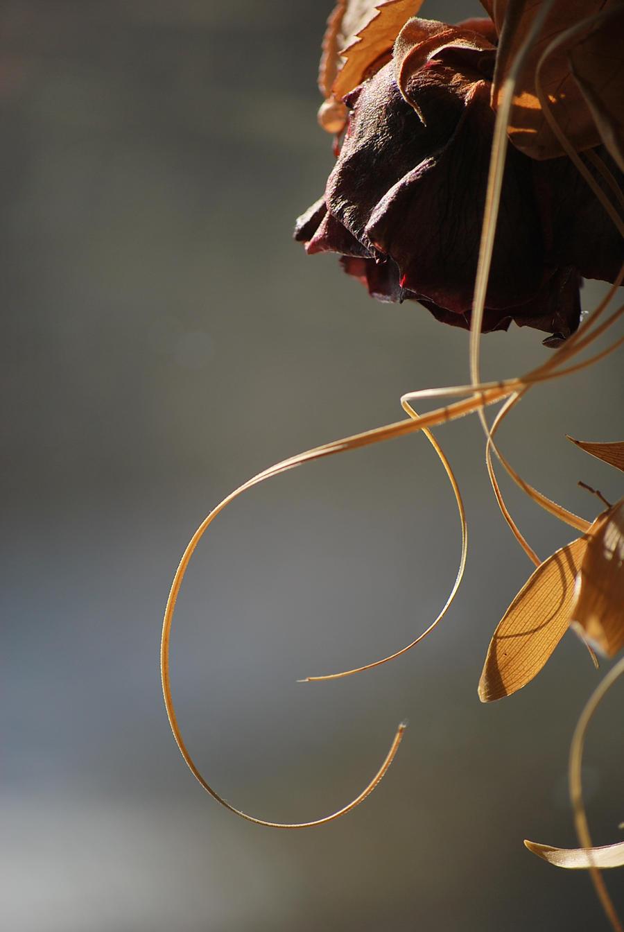 Sunlit rose by Antivuskning