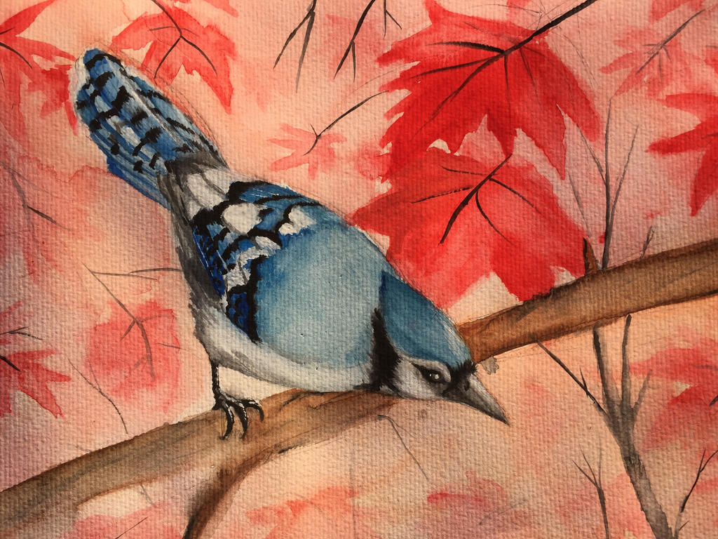 Blue Jay in Watercolor by Giuliabeck