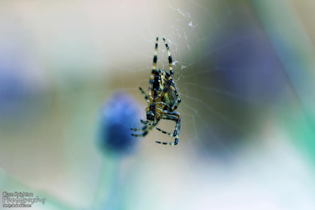 Cold Spider by Clerdy