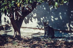 Island Cat III