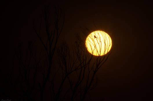 BandB on the Sun..................