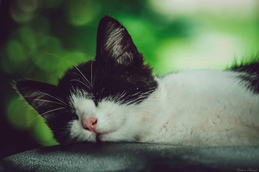 Sleep around the Clock
