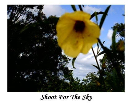 Shoot for the sky by rapo