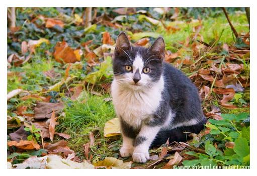 cute-cat-picture