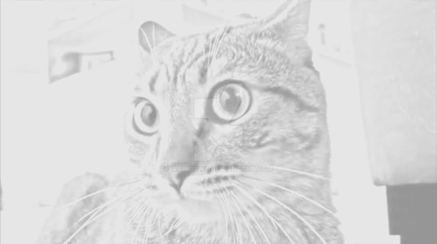 Hey Little Sparta - Mean Kitty by irainb0wz