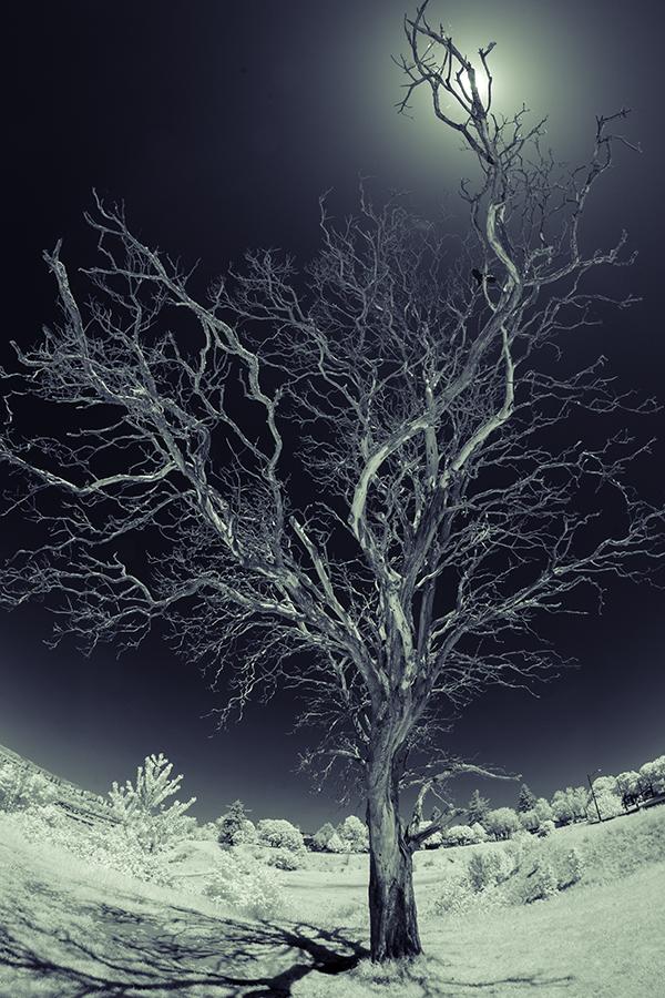 A Dead Tree by marman44