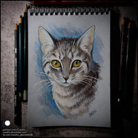 Sketchbook - Yuki