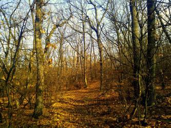 An Autumn Forest Path by Beliar6