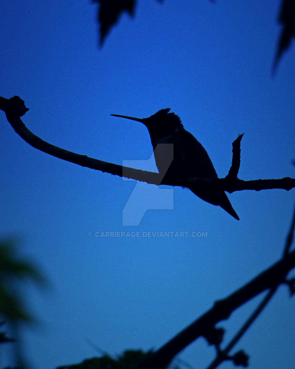 Hush-A-Bye Birdie