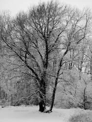 Winter, Act II