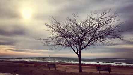 Polar Beach